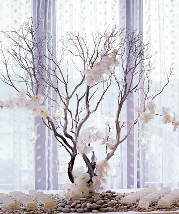 branches phelanopsis